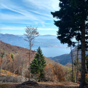 Cima l'Alpe