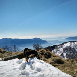 Monte Morrisolino
